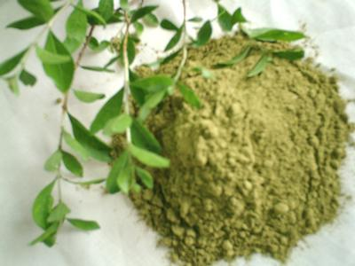 morocco-henna-2