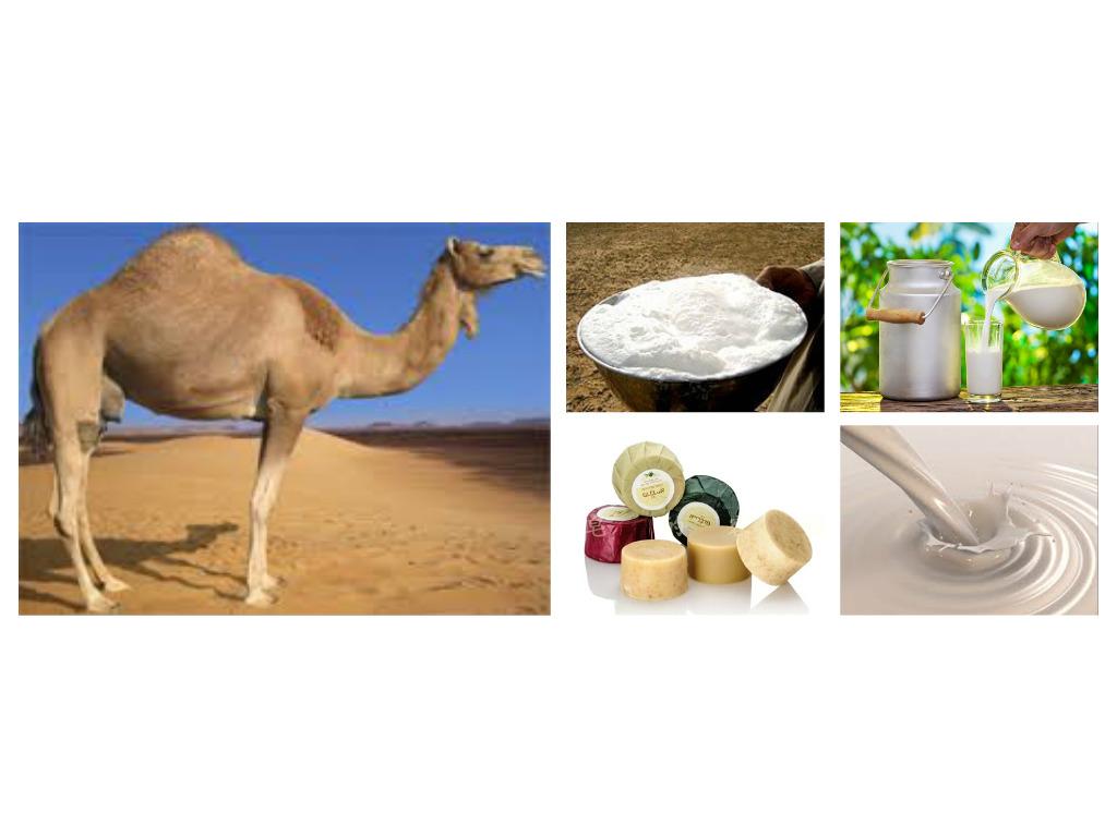 Camel Milk Soap Benefits